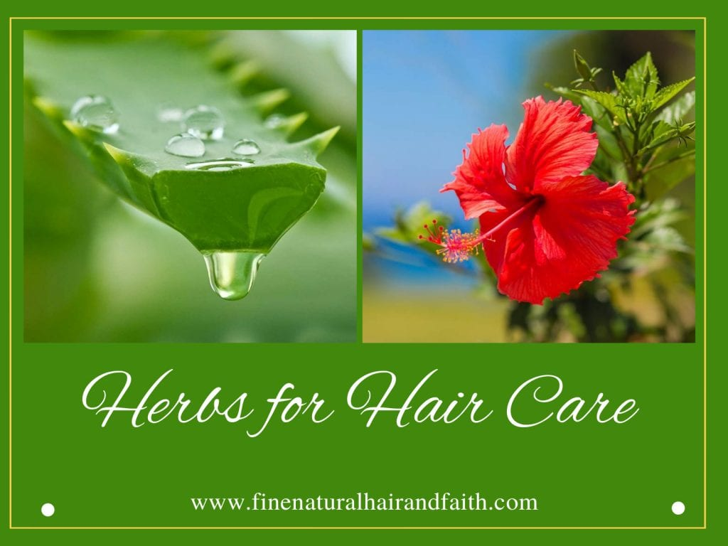 Aloe Vera and hibiscus herbs for hair care